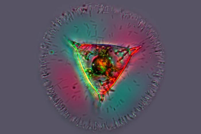 Led mikroskopbeleuchtung bw optik