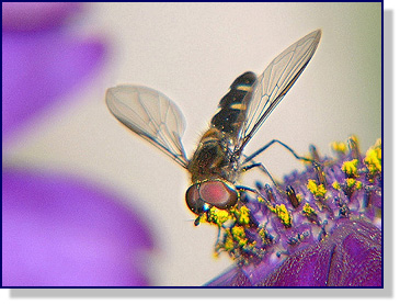 Danny Young's photograph of a small fly